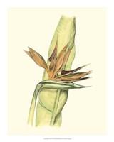 "Elegant Tropics I by Jennifer Goldberger - 16"" x 20"", FulcrumGallery.com brand"