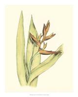 "Elegant Tropics V by Jennifer Goldberger - 16"" x 20"", FulcrumGallery.com brand"