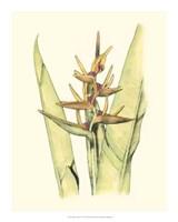 "Elegant Tropics VI by Jennifer Goldberger - 16"" x 20"", FulcrumGallery.com brand"