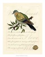 """Romantic Dove I by Vision Studio - 16"""" x 20"""""""