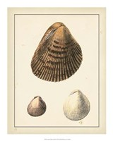 """Antique Diderot Shells II by Denis Diderot - 16"""" x 20"""""""
