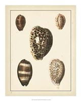 """Antique Diderot Shells III by Denis Diderot - 16"""" x 20"""""""