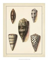 """Antique Diderot Shells IV by Denis Diderot - 16"""" x 20"""""""