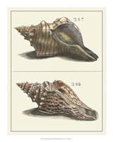 "Seashell Menagerie II by Vision Studio - 16"" x 20"""
