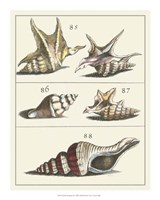 "Seashell Menagerie IV by Vision Studio - 16"" x 20"""