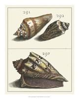 "Seashell Menagerie VI by Vision Studio - 16"" x 20"""