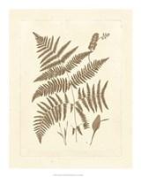 "Sepia Ferns I by Vision Studio - 16"" x 20"""