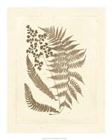 "Sepia Ferns III by Vision Studio - 16"" x 20"""