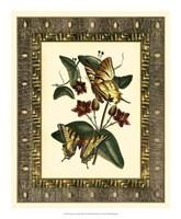 "Leather Framed Butterflies I by Deborah Bookman - 16"" x 20"""