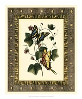 Leather Framed Butterflies II Framed Print