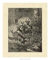 Vintage Roe Deer I Fine Art Print