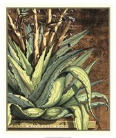 Graphic Aloe I Fine Art Print