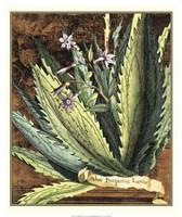Graphic Aloe II Fine Art Print