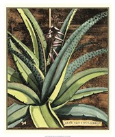 Graphic Aloe III Fine Art Print