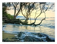 """Reaching for the Sea II by Danny Head - 26"""" x 20"""""""