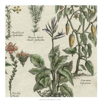 "Delicate Garden II by Vision Studio - 20"" x 20"""