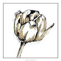 "Tulip Sketch II by Ethan Harper - 20"" x 20"", FulcrumGallery.com brand"