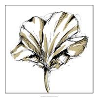 "Tulip Sketch IV by Ethan Harper - 20"" x 20"", FulcrumGallery.com brand"