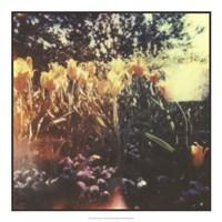 """Tulipa Exposta I by Jason Johnson - 20"""" x 20"""""""