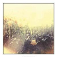 Tulipa Exposta IV Fine Art Print