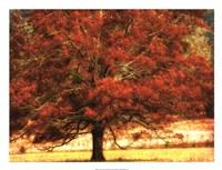 "Autumn Oak I by Danny Head - 26"" x 20"""