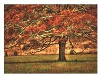 An Oak in the Cove Fine Art Print