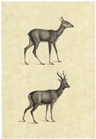 Vintage Deer I Fine Art Print