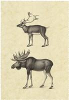 Vintage Elk Fine Art Print