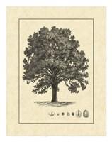 Vintage Tree I Fine Art Print