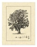 Vintage Tree II Fine Art Print