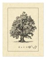 Vintage Tree III Fine Art Print