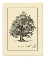"Vintage Tree III by Vision Studio - 16"" x 20"""