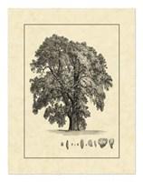 Vintage Tree IV Fine Art Print