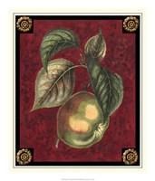 "Pomme De Canada by Pierre-Joseph D'avoine - 18"" x 21"""