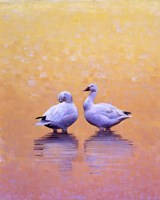 Dawn Meditation by Julie Chapman - various sizes