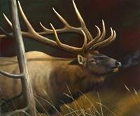 Elk Portrait II Fine Art Print