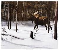"Winter Forage by Kevin Daniel - 25"" x 21"""