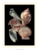 """Treasures of the Sea I by Ehret and Redoute - 17"""" x 22"""" - $24.99"""