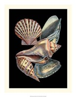 """Treasures of the Sea II by Ehret and Redoute - 17"""" x 22"""" - $24.99"""