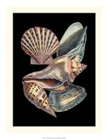 Treasures of the Sea II Fine Art Print