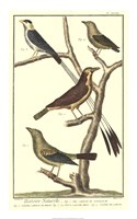 "Bird Family I by Martinet - 14"" x 22"""