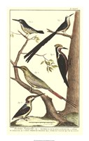 "Bird Family III by Martinet - 14"" x 22"""