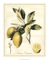 "Tuscan Fruits II by Vision Studio - 18"" x 22"", FulcrumGallery.com brand"