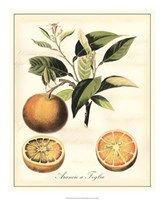 "Tuscan Fruits III by Vision Studio - 18"" x 22"""