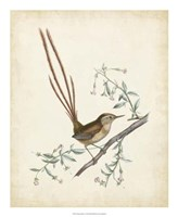 "Delicate Birds I - 18"" x 22"""