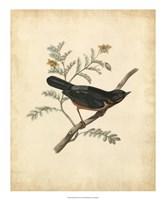 """Delicate Birds III - 18"""" x 22"""""""