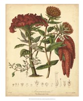 """Botanicals II by Elizabeth Twining - 18"""" x 22"""""""