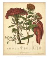 Botanicals II Fine Art Print