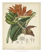 Botanicals III Fine Art Print