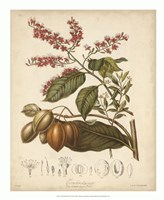 "Botanicals IV by Elizabeth Twining - 18"" x 22"""